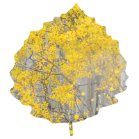 fall_specials