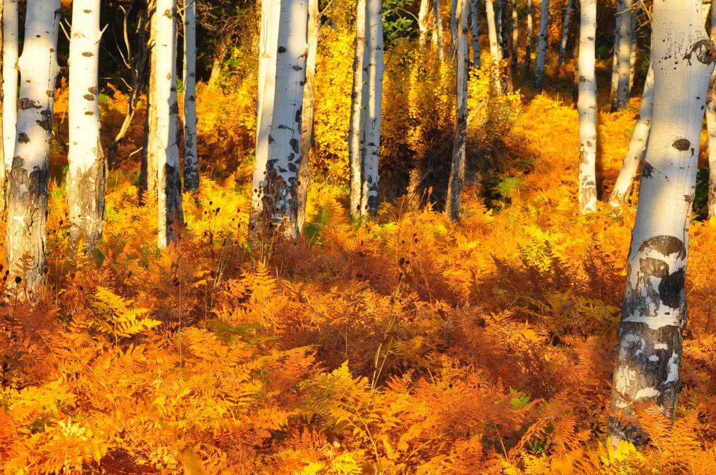 fall-foliage-sarvice-creek